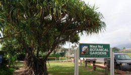Starr-050407-6213-Pandanus_tectorius-with_sign-Maui_Nui_Botanical_Garden-Maui_(24718730016)