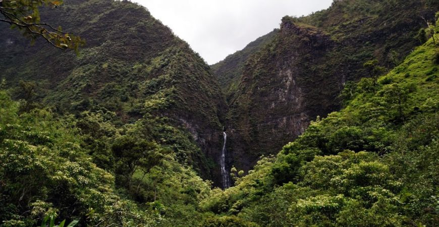 Endangered Native Habitats