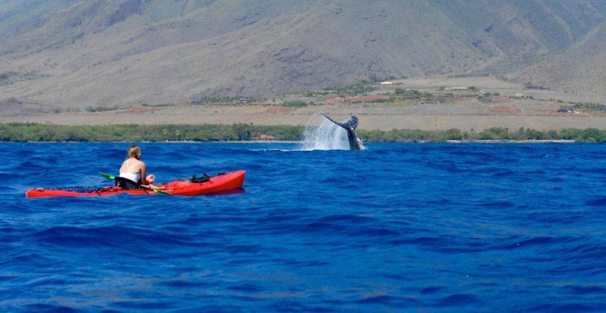 Olowalu Private Kayak & Whale Watch