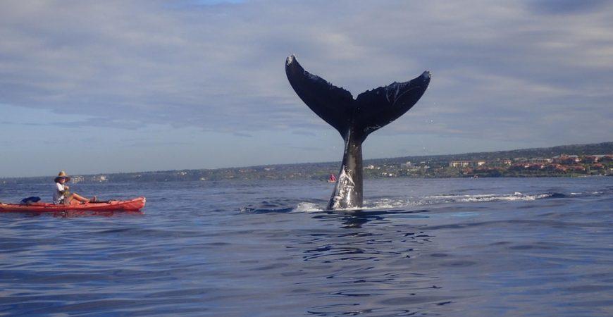 Makena Group Whale Watch & Snorkel Kayak Tour