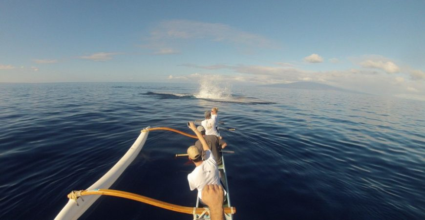 South Maui Outrigger Canoe and Whale Watch