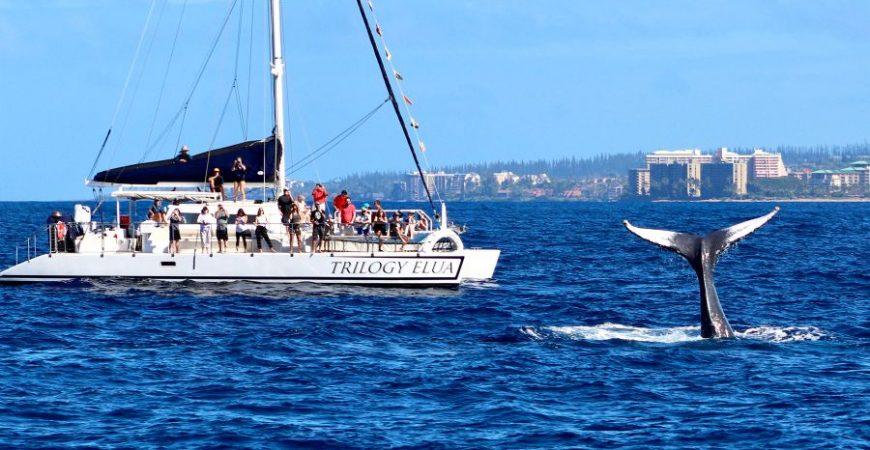 Ka'anapali Whale Watch