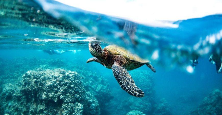 Premium Morning Snorkel