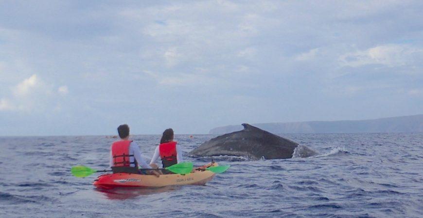 South Maui Whale Watch Kayak Tour