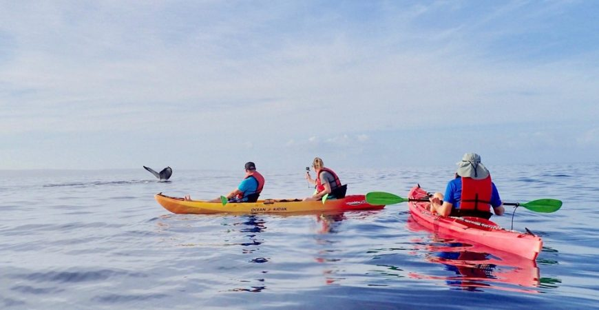 Makena Group Whale Watch Kayak Tour