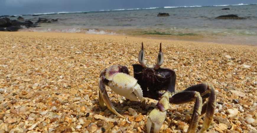 North Shore Coastal Wildlife Hikes