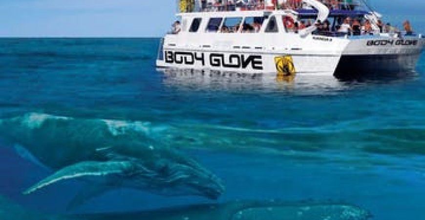 Kona Whale Watching Cruise